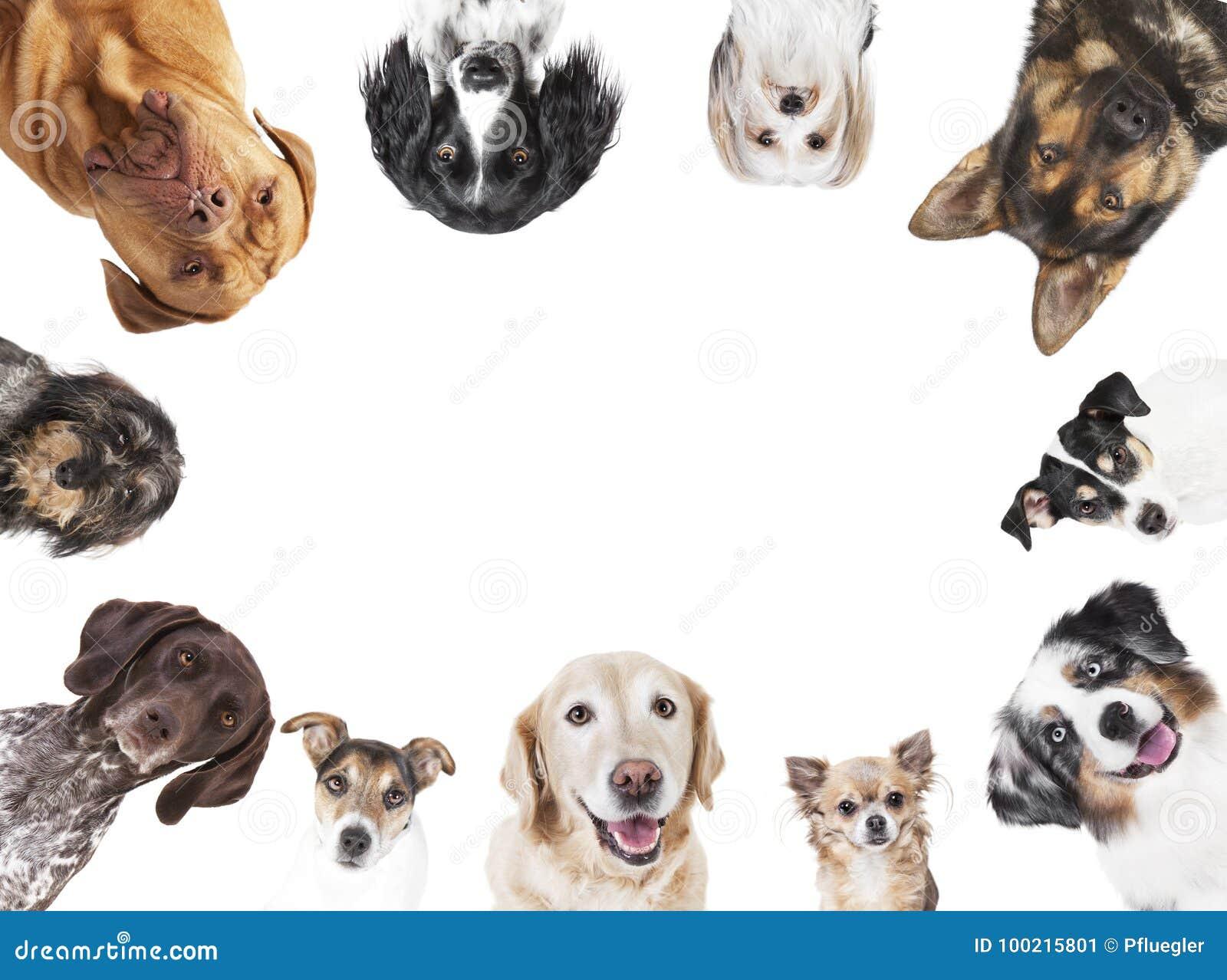 Diverse disposition de circulaire de têtes de chien