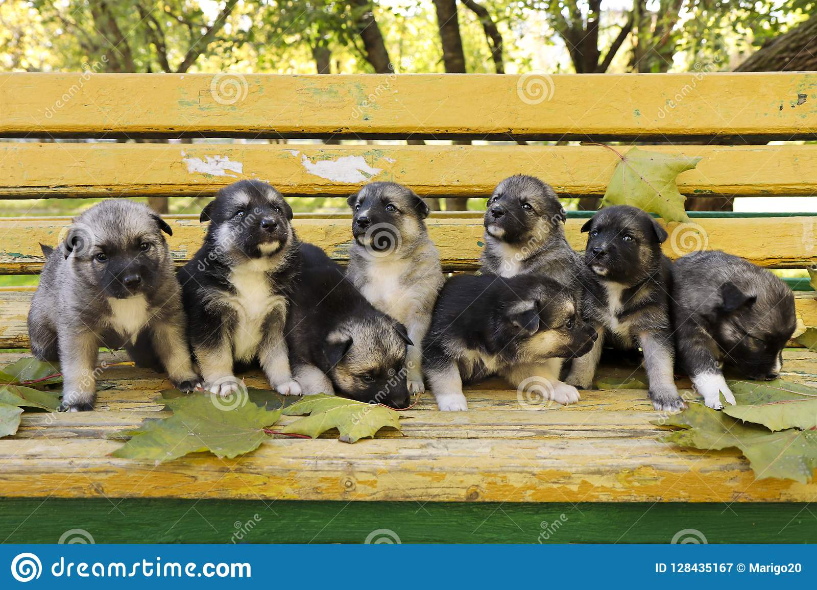 A Diverse Group Of Puppies Of Breed Of The Husky Stock Image Image