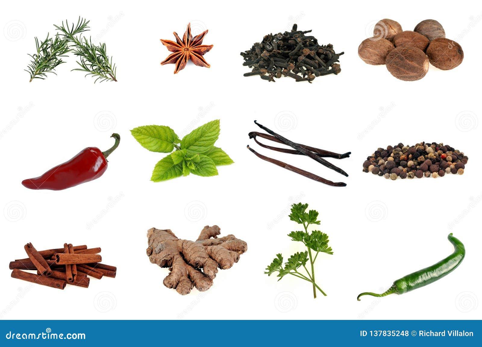 Diverse kruiden en aromatische planten op een witte achtergrond