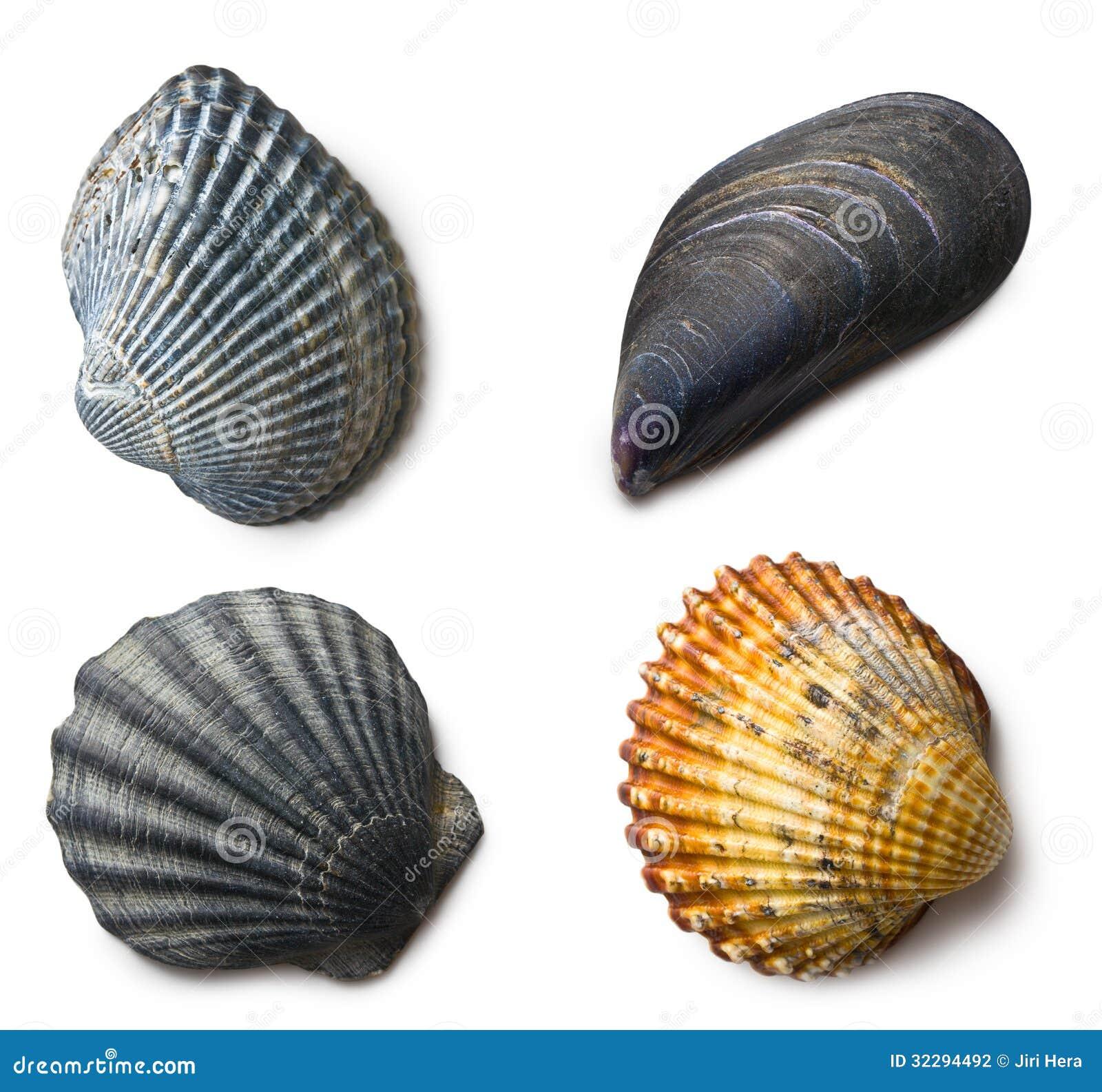 Diverse overzeese shells op witte achtergrond