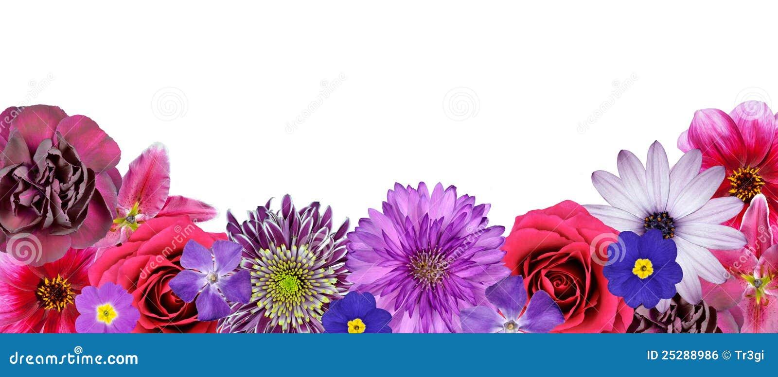 Diverse roze, purpere rode bloemen bij de rij van de bodem royalty ...