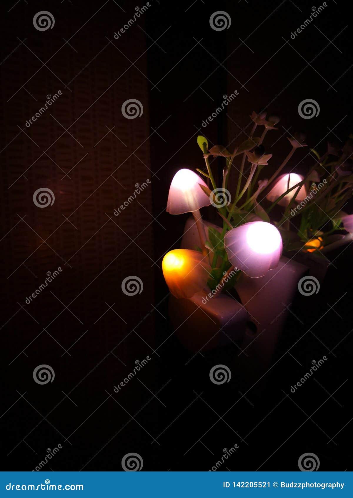 Diverse verlichtingskleur van de paddestoelbloem van de nachtlamp Het donkere omringen De ruimte van het exemplaar