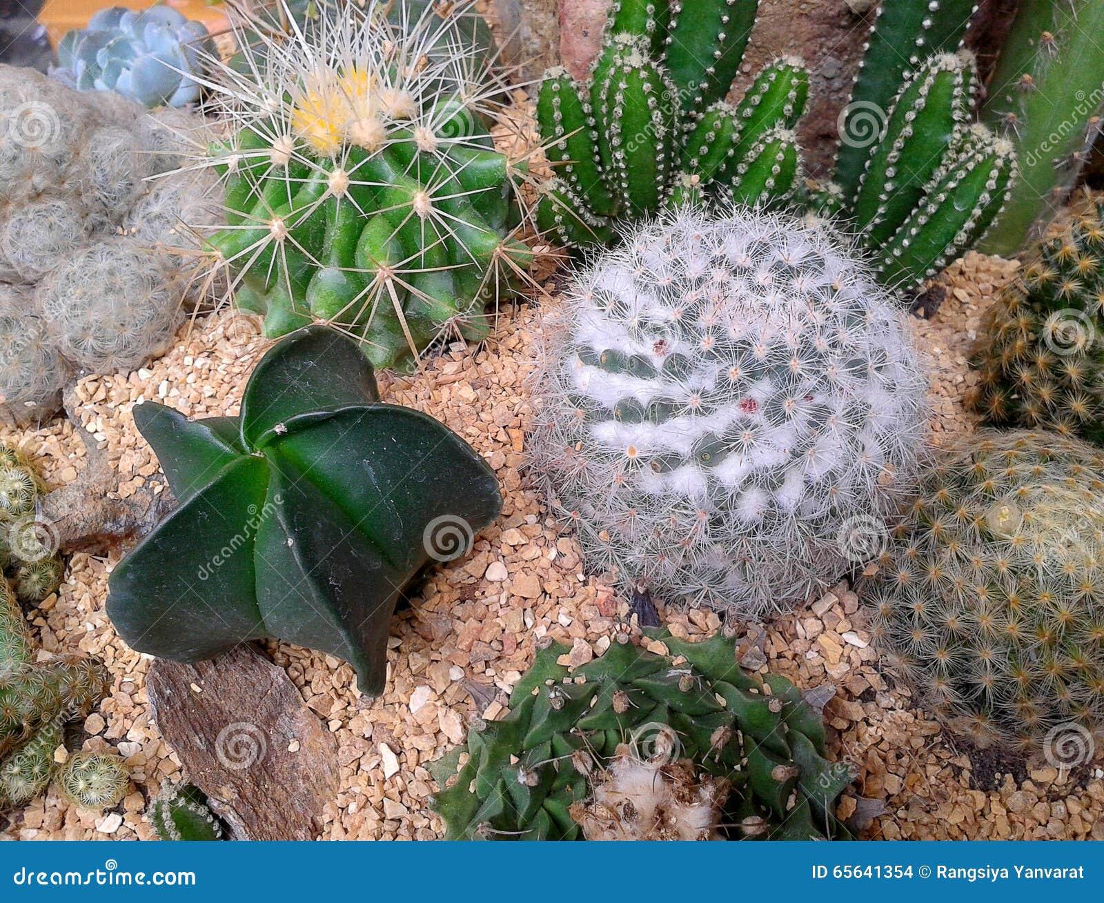 Diverses usines de cactus