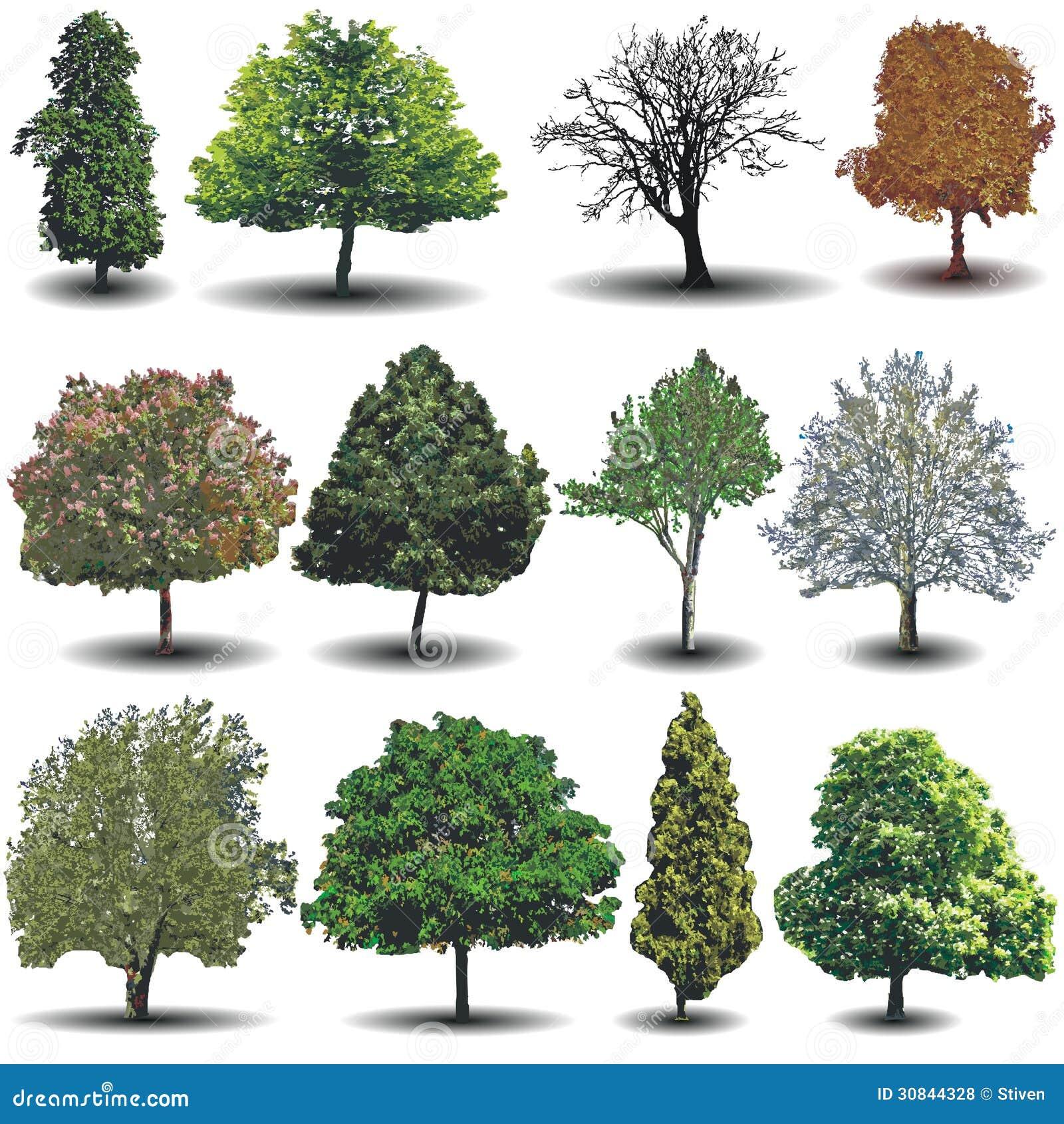 Diversos árboles del vector