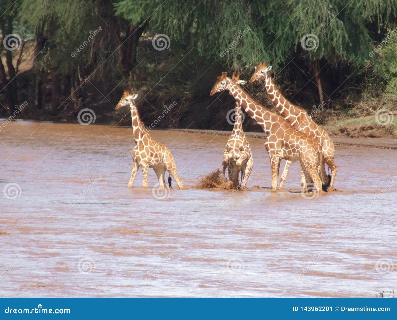Diversos animales en ?frica en safari en Kenia
