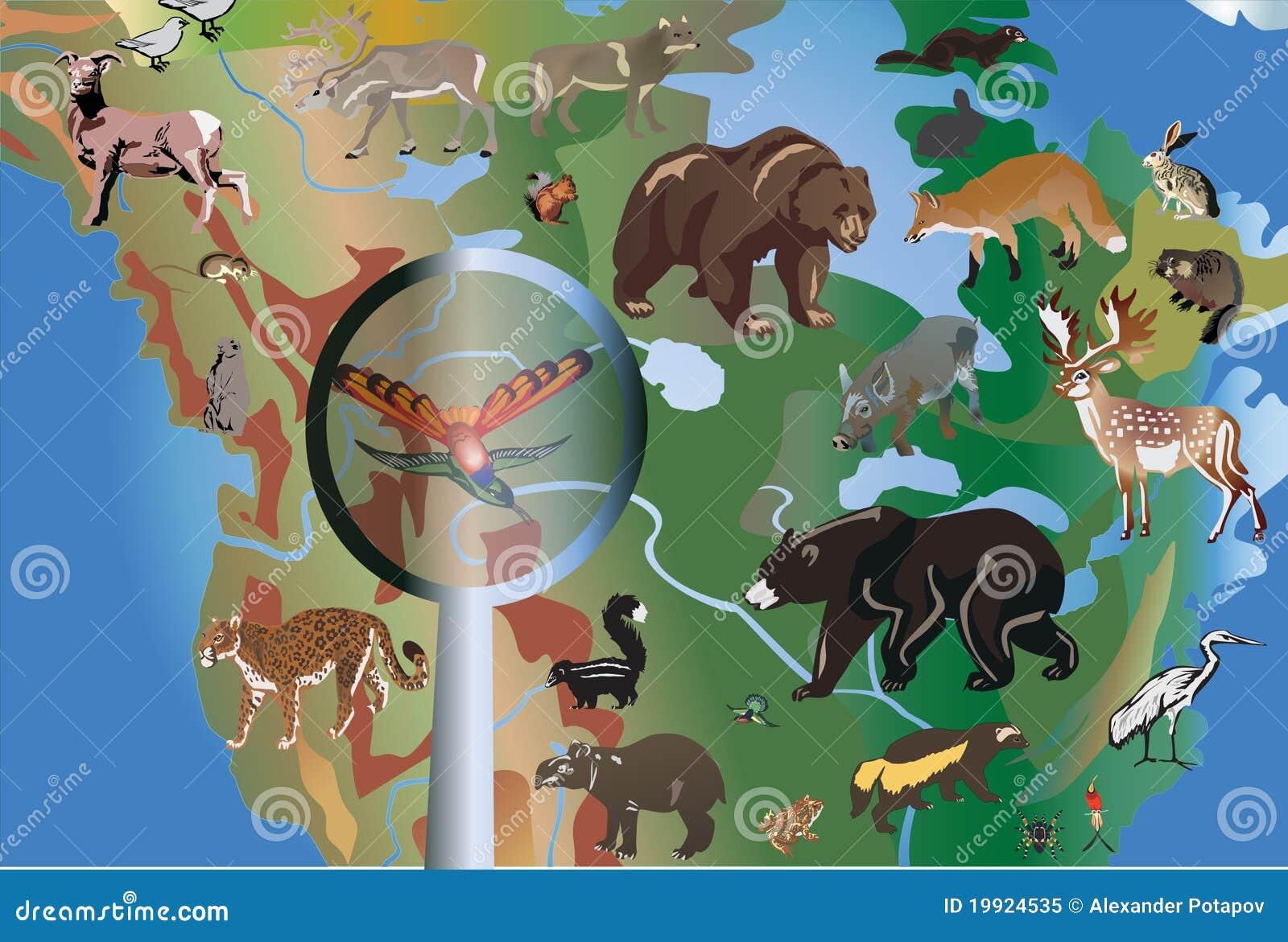 Diversos animales en Norteamérica