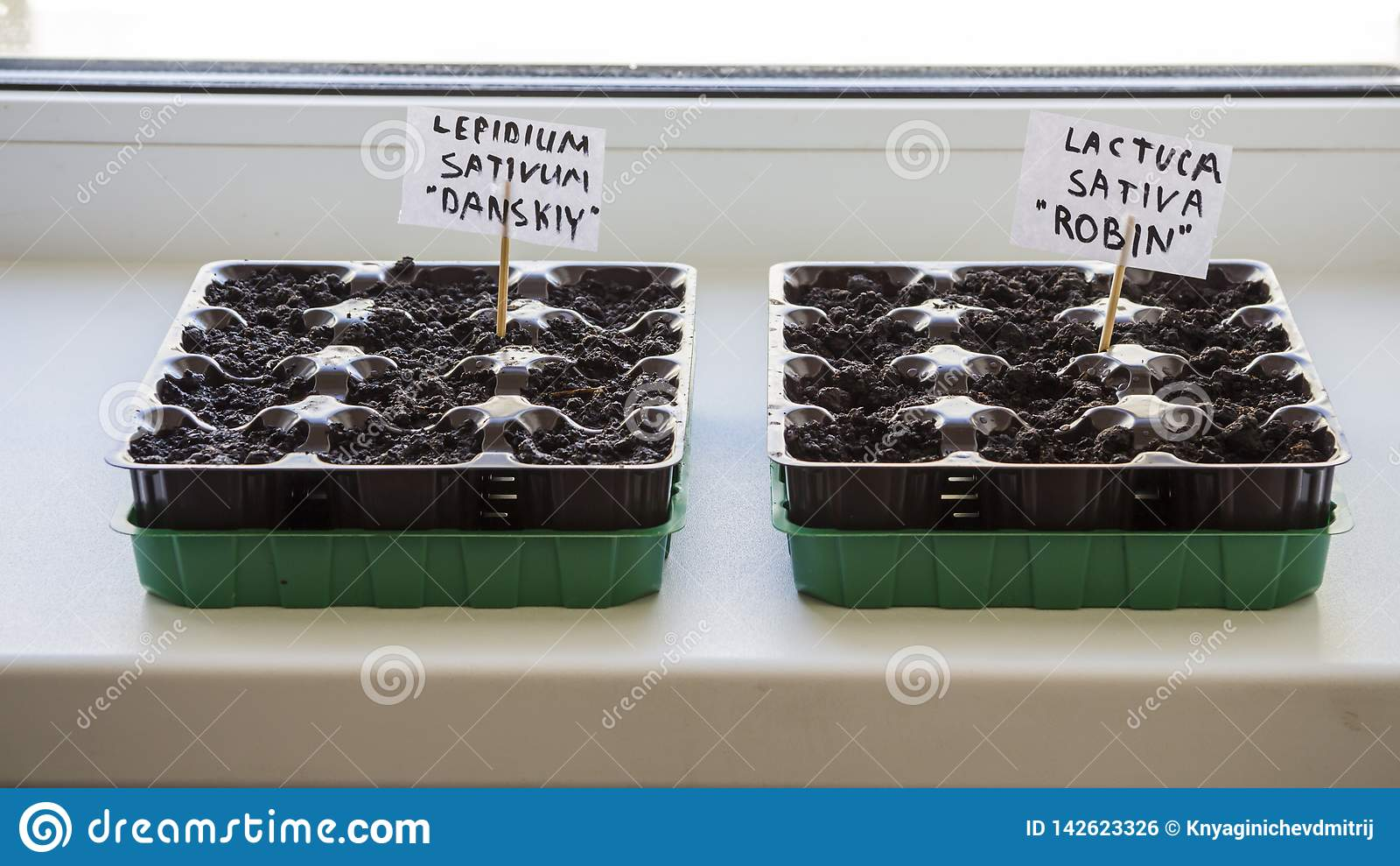 Diversos recipientes pl?sticos com solo do jardim Pl?ntula-imagem plantada