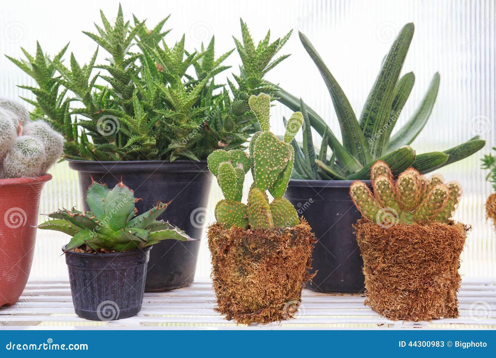 Diversos tipos de cactus foto de archivo imagen 44300983 for Clases de cactus
