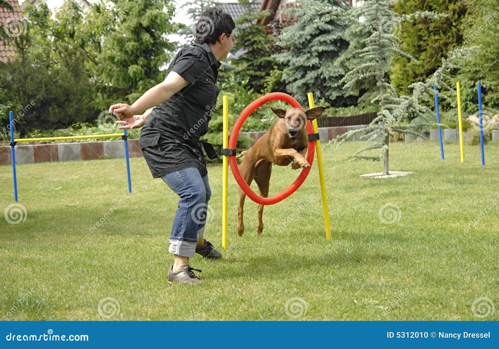 Download Divertimento Della Squadra Con I Giochi Fotografia Stock - Immagine di azione, herding: 5312010