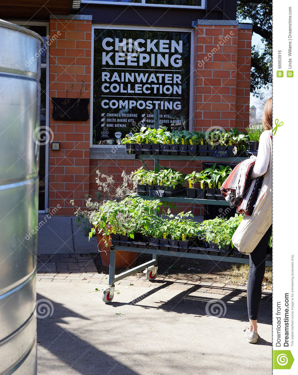 Diy Chicken Keeping And Rainwater Collection Editorial Photo Image 66953916