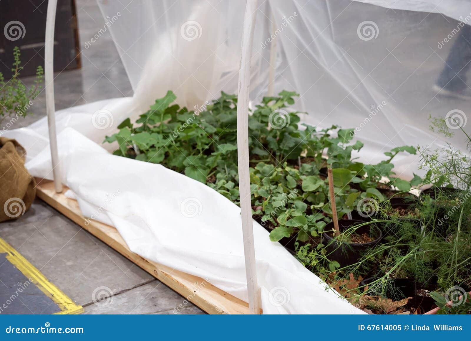 Diy Gewachshaus Fur Krauter Stockbild Bild Von Gartenbau Blume