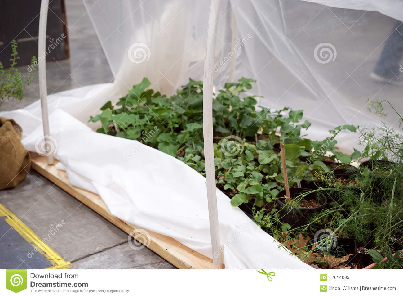 This simple DIY greenhouse is made from pvc pipe lumber and plastic. Herb plants are protected from killing frost and insects when covered. & DIY greenhouse for herbs stock image. Image of horticulture - 67614005