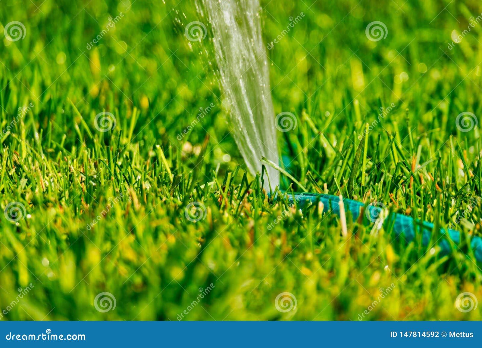 Diy Lawn Sprinkler Working In Back Yard Grass Stock Photo