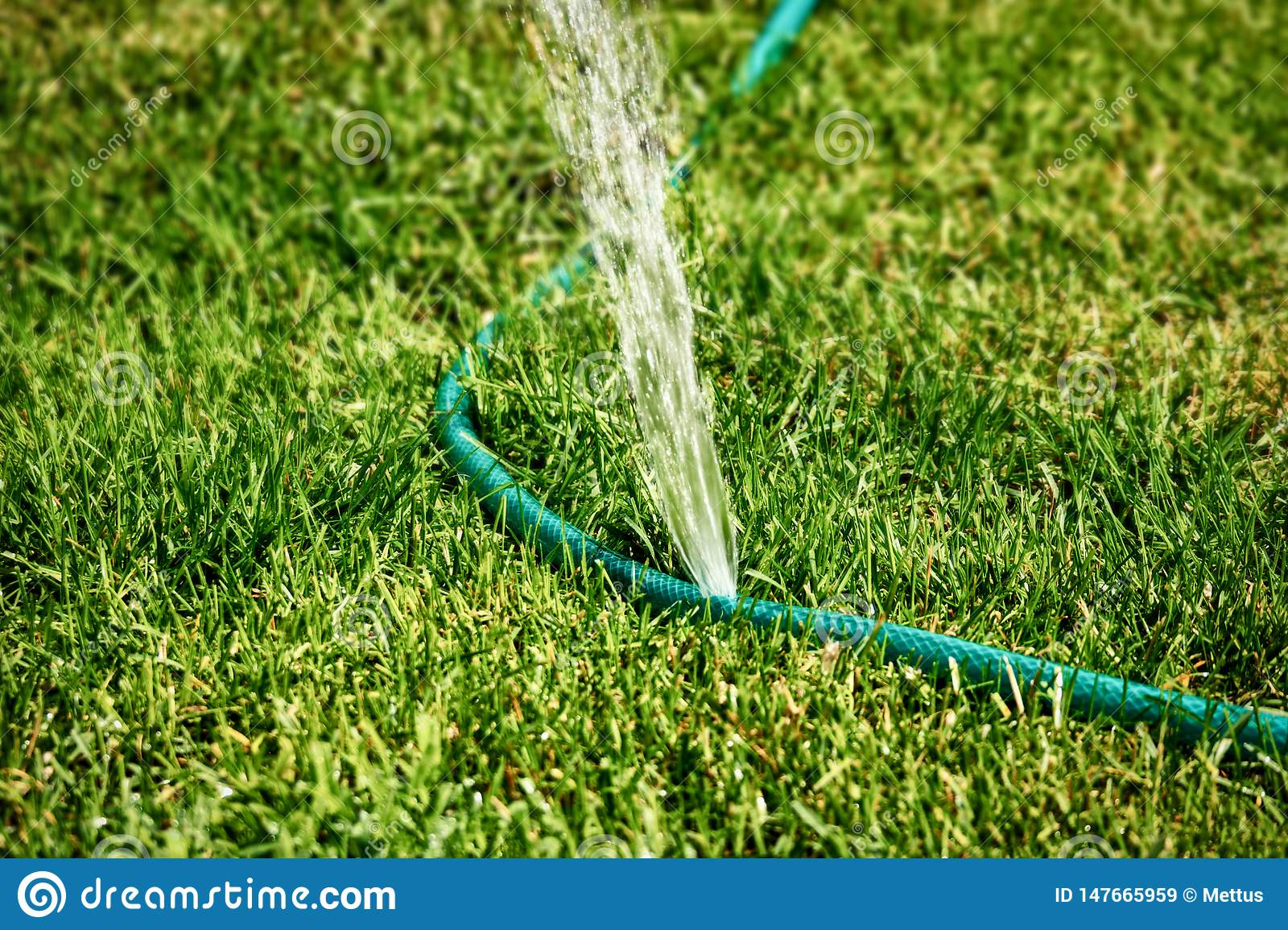 Diy Lawn Sprinkler Working In Grass Spreading Water All Over