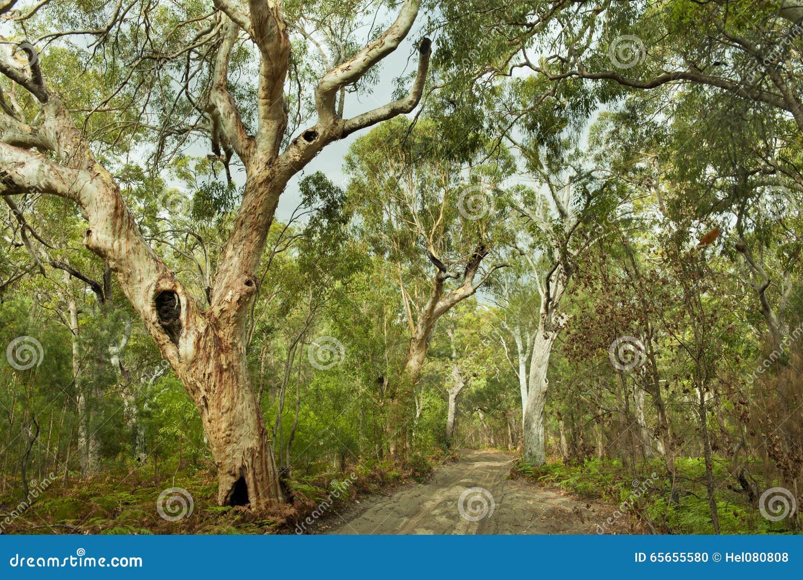 Djungel för ö för Australien skogfraser