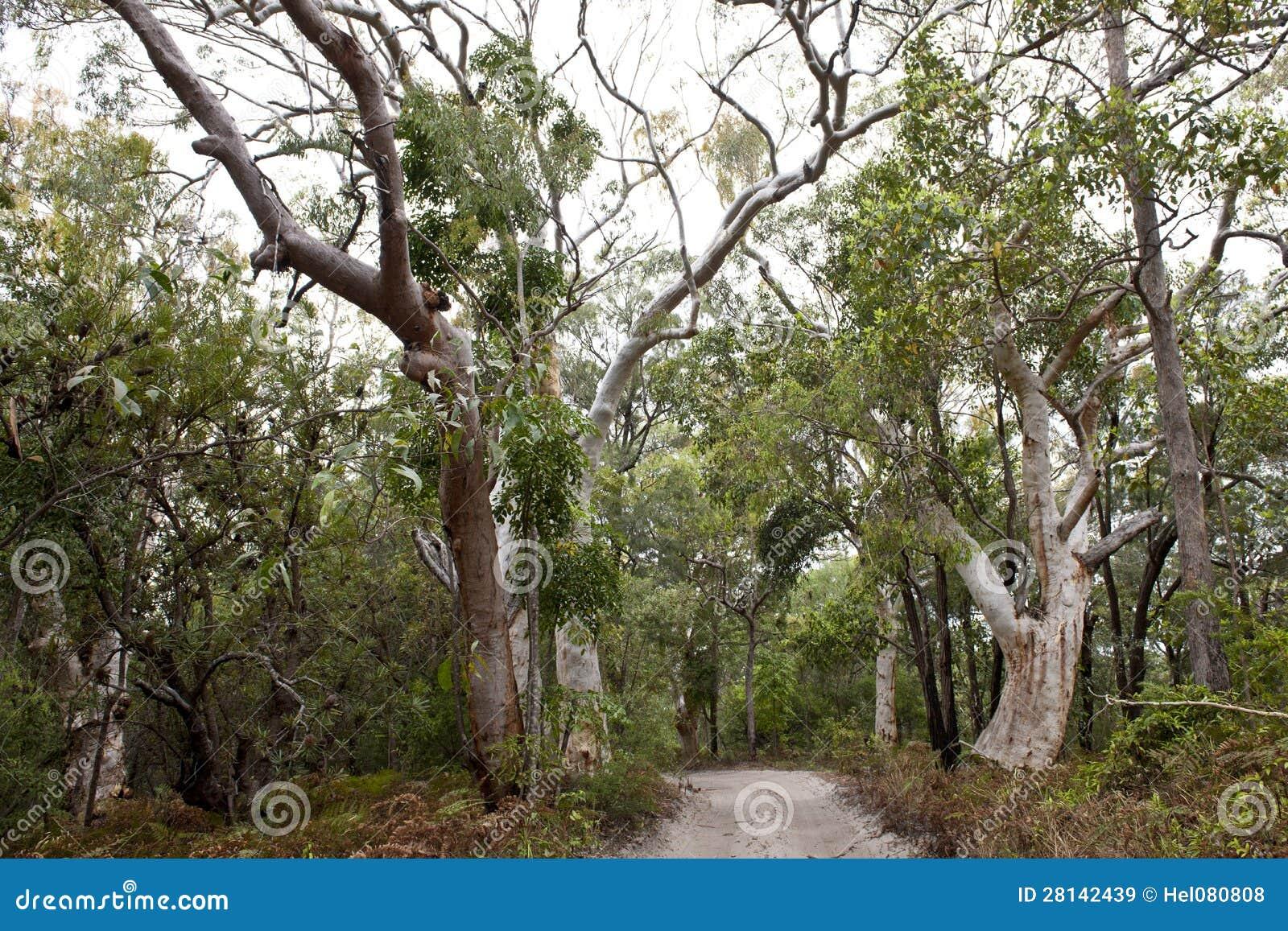 DjungelskogFraser ö, Australien