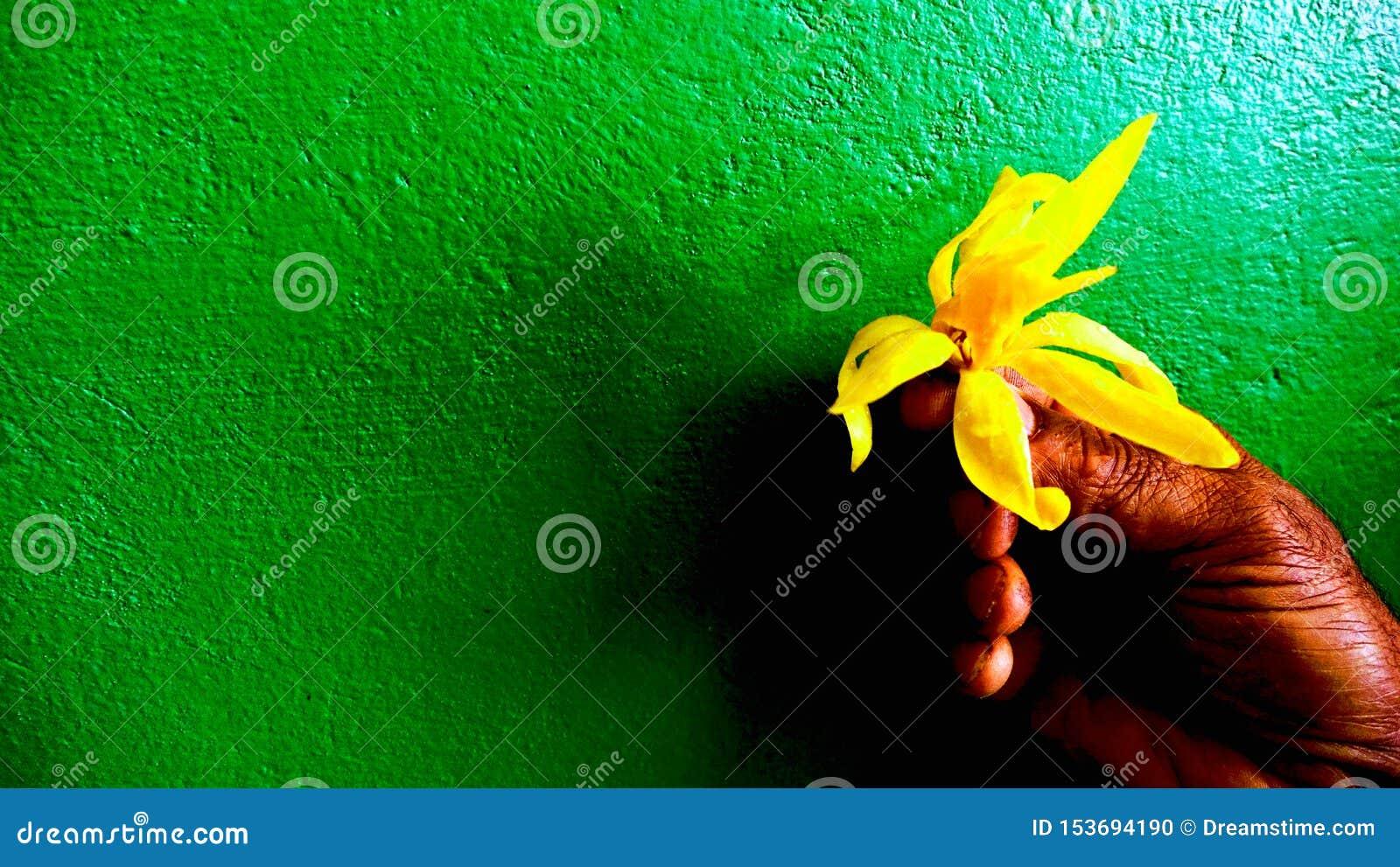 Djup - gult på det djupt - grön tapet