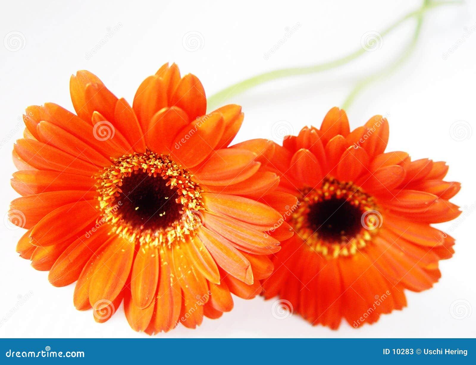 Djup orange
