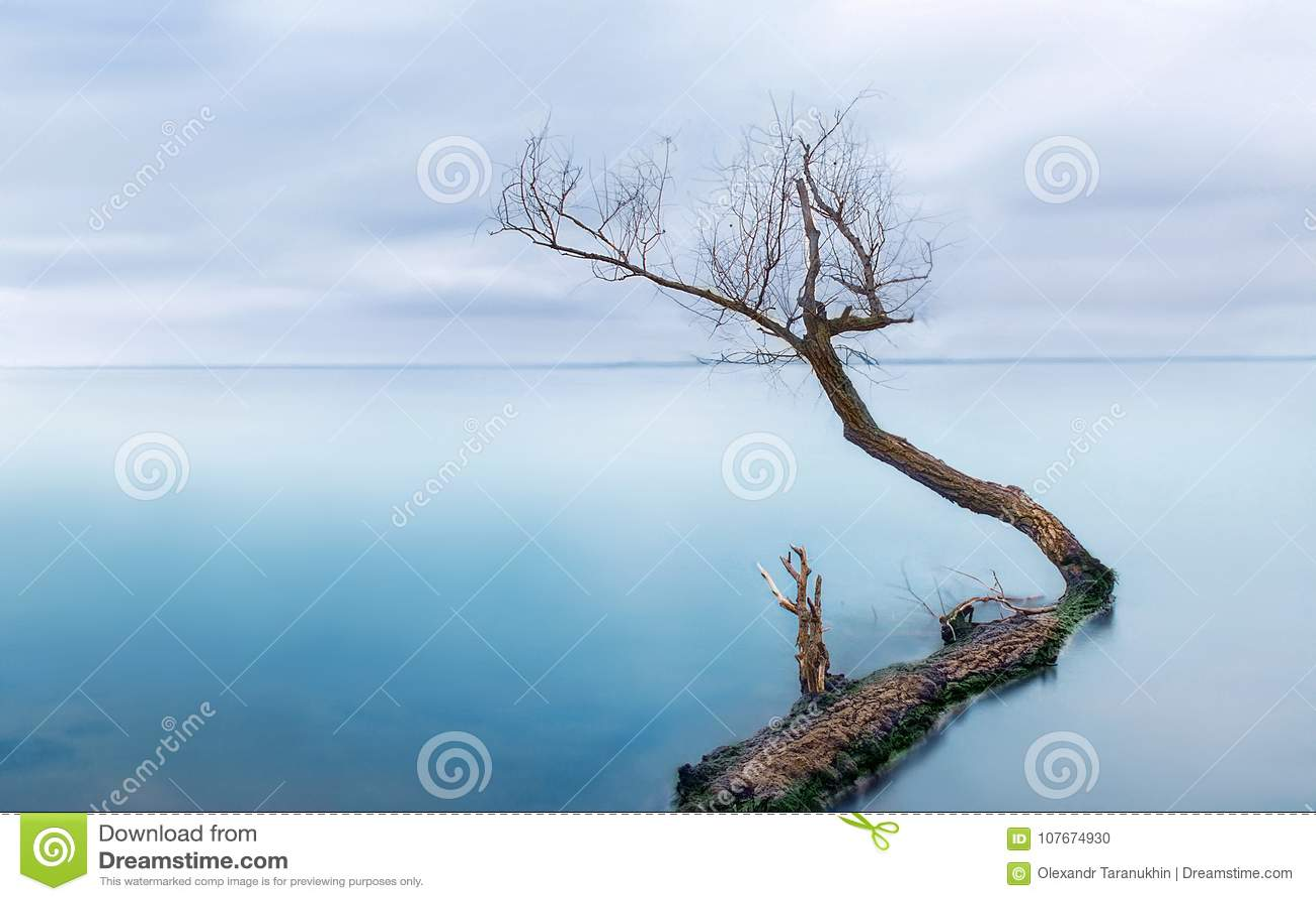Djupfryst hav med ett ensamt träd - tyst lugn