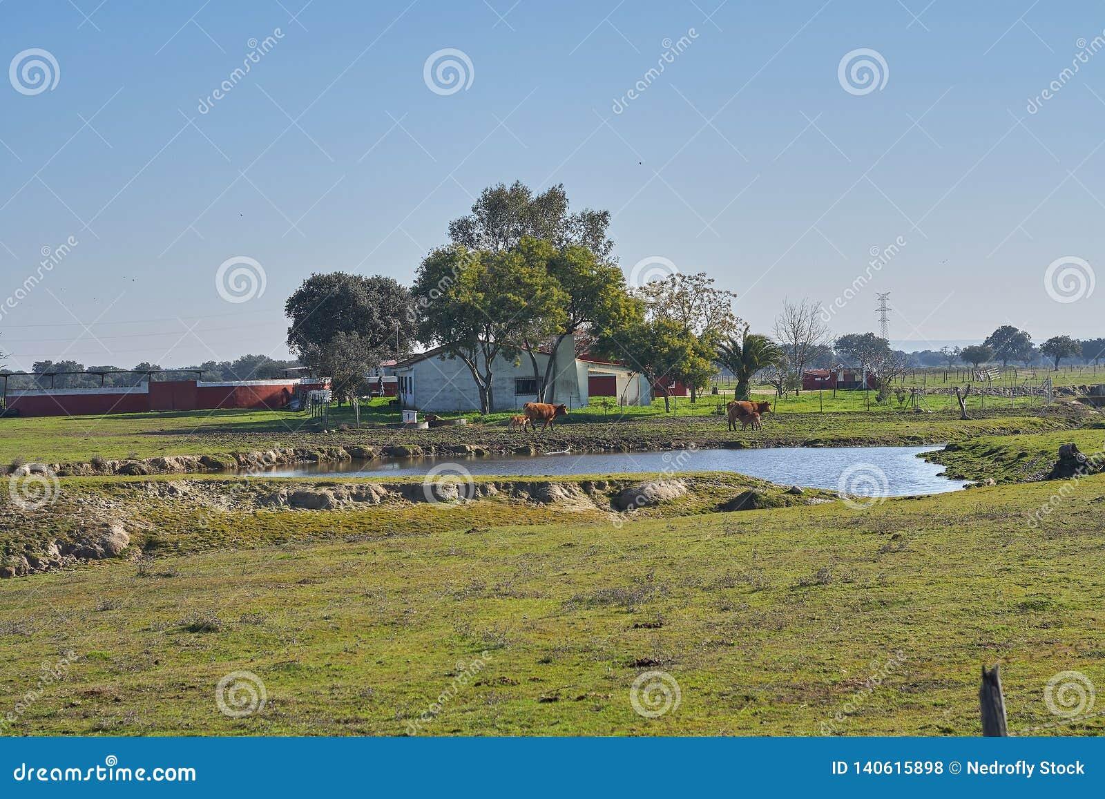 Djur lantgård med kor och sjön