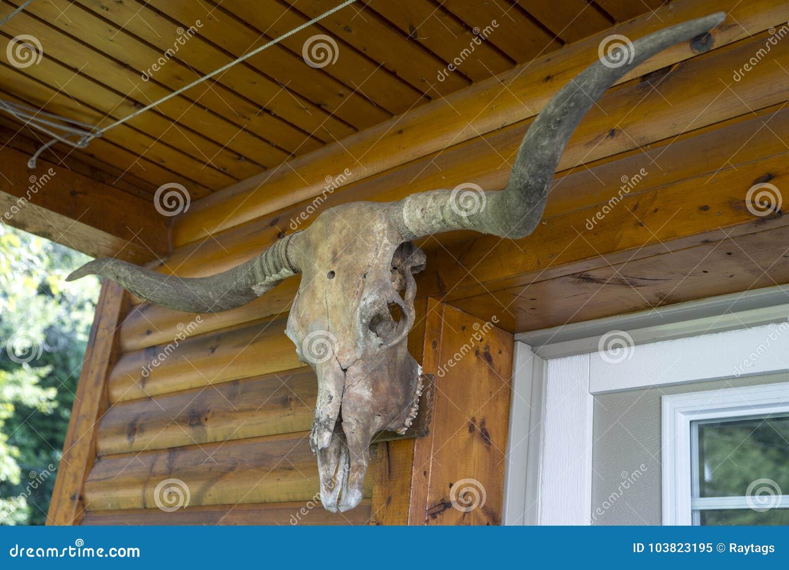 Djur skalle - jakttrofé