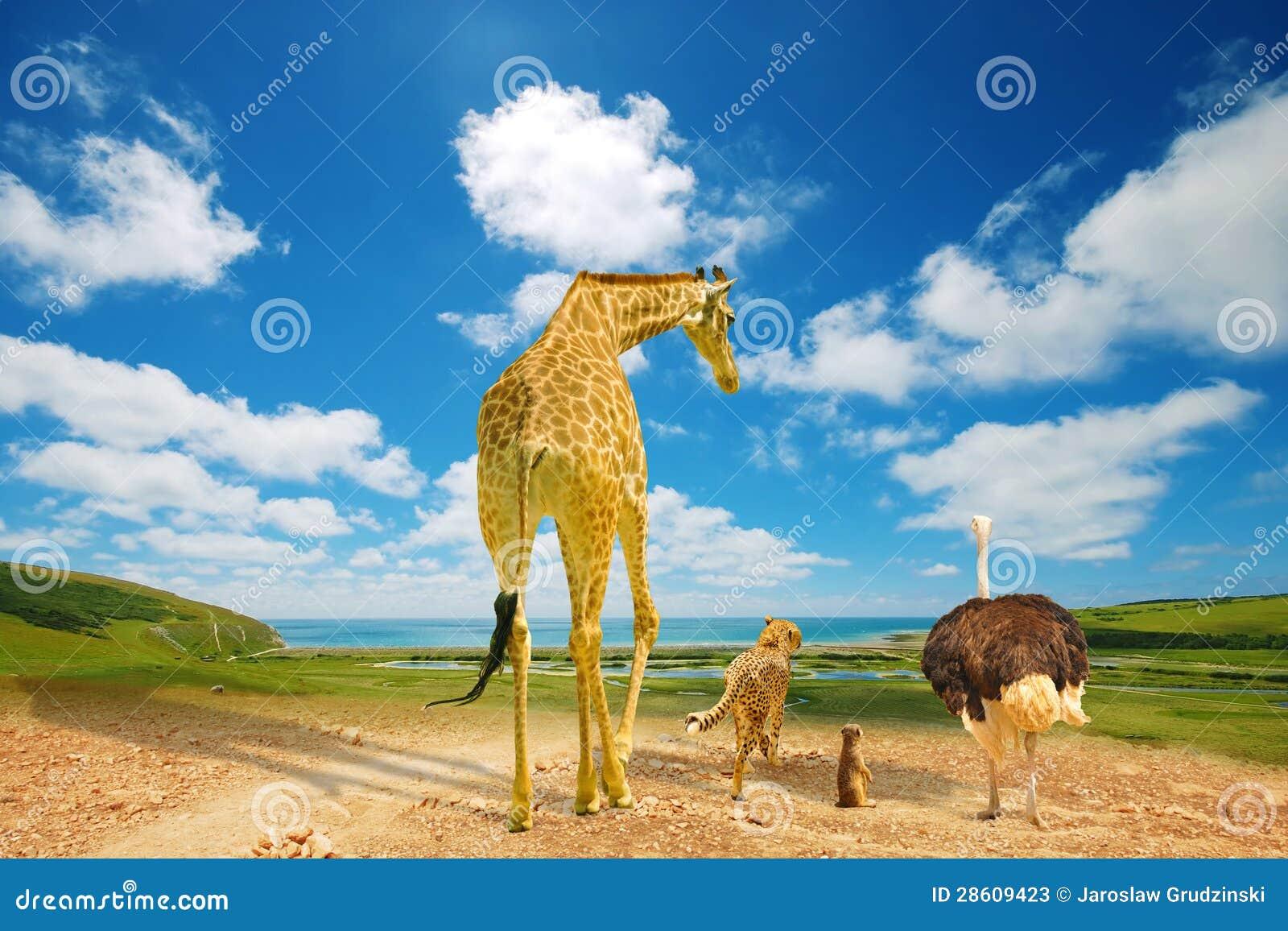 Djur som migrating till gröna länder