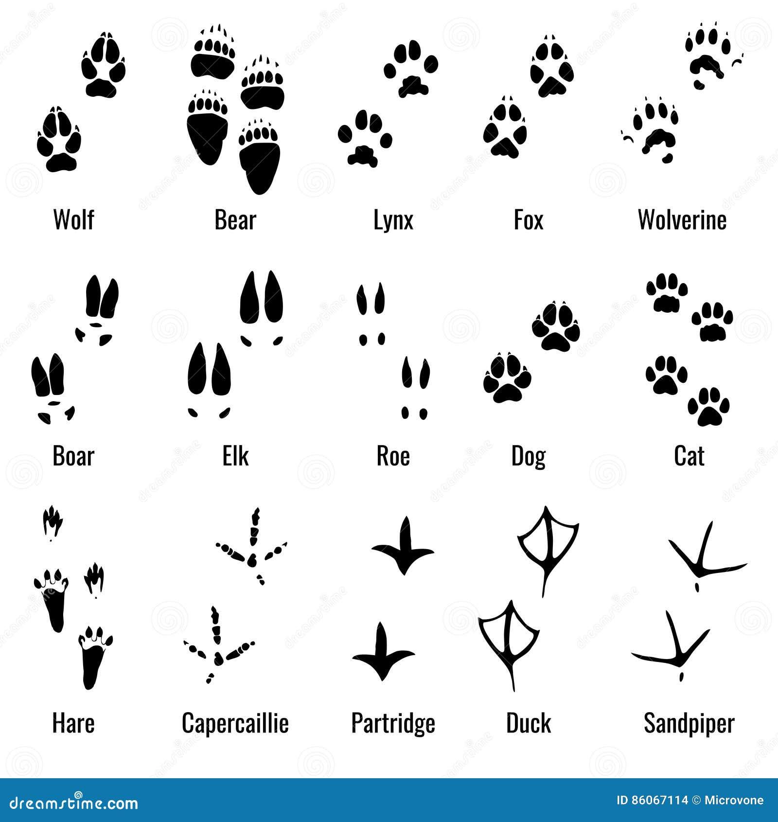 Djurlivdjur, reptilar och fåglar fotspåret, djur tafsar tryckvektoruppsättningen