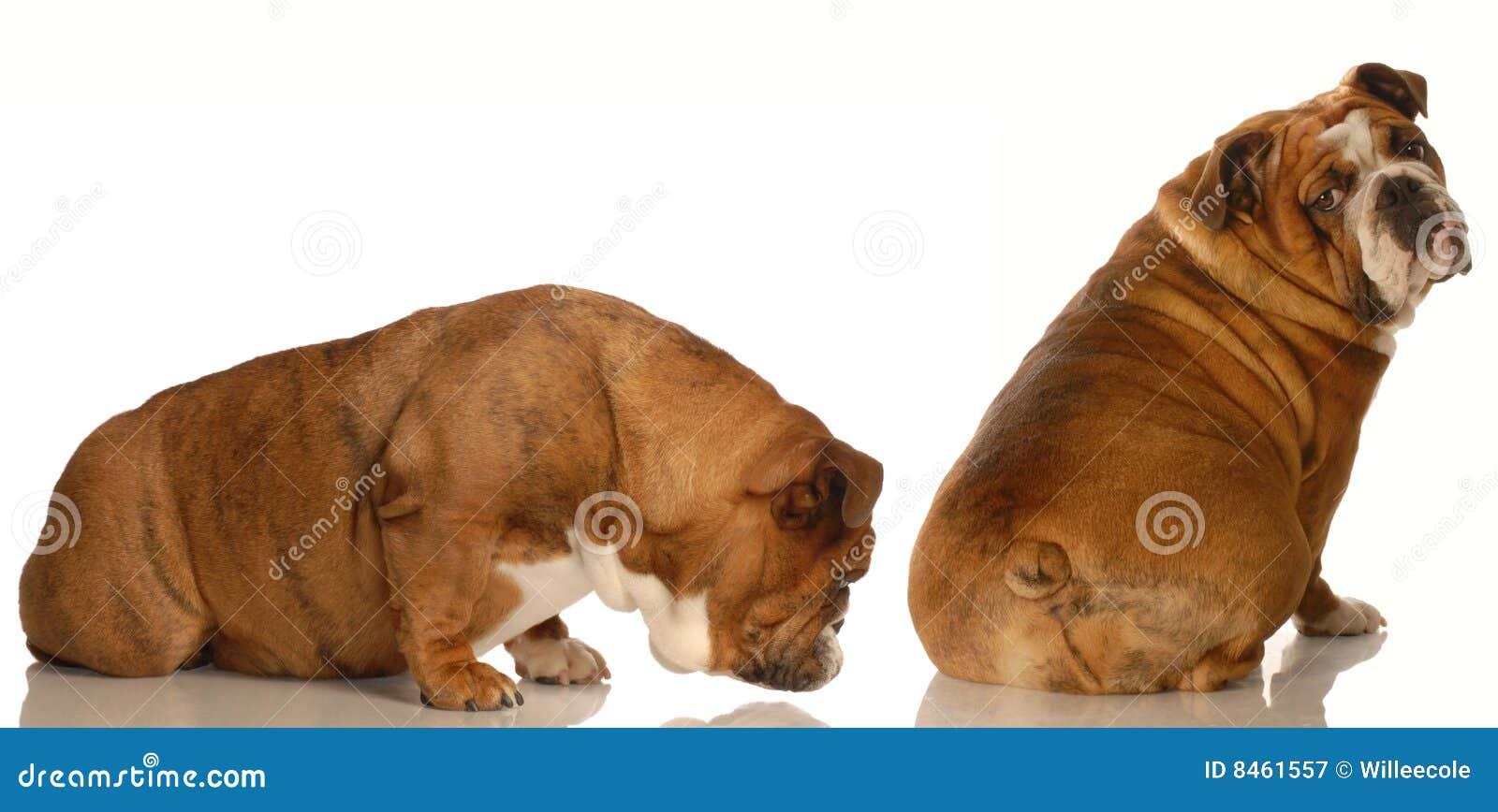 Djurt uppförande