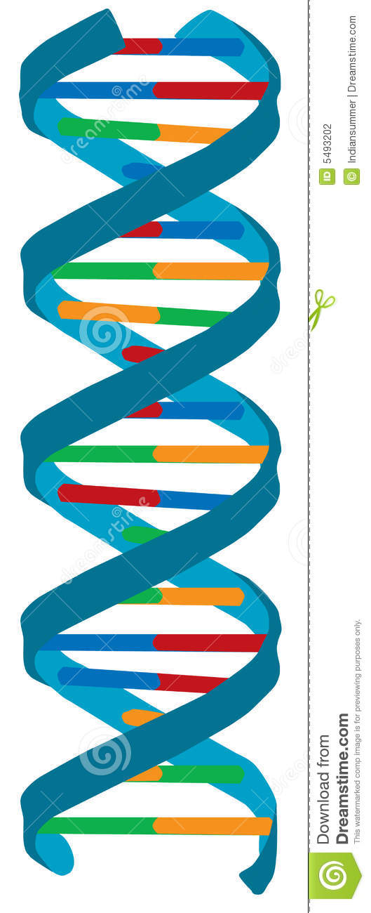 DNA Color Illustration, Isolated Stock Photography