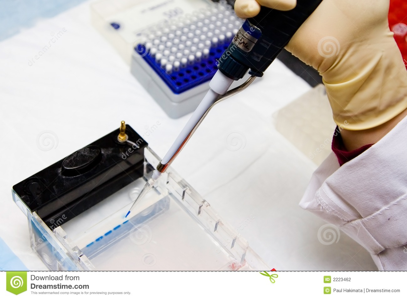 Scientist loading an agarose/SDS-PAGE gel for electrophoresis ...