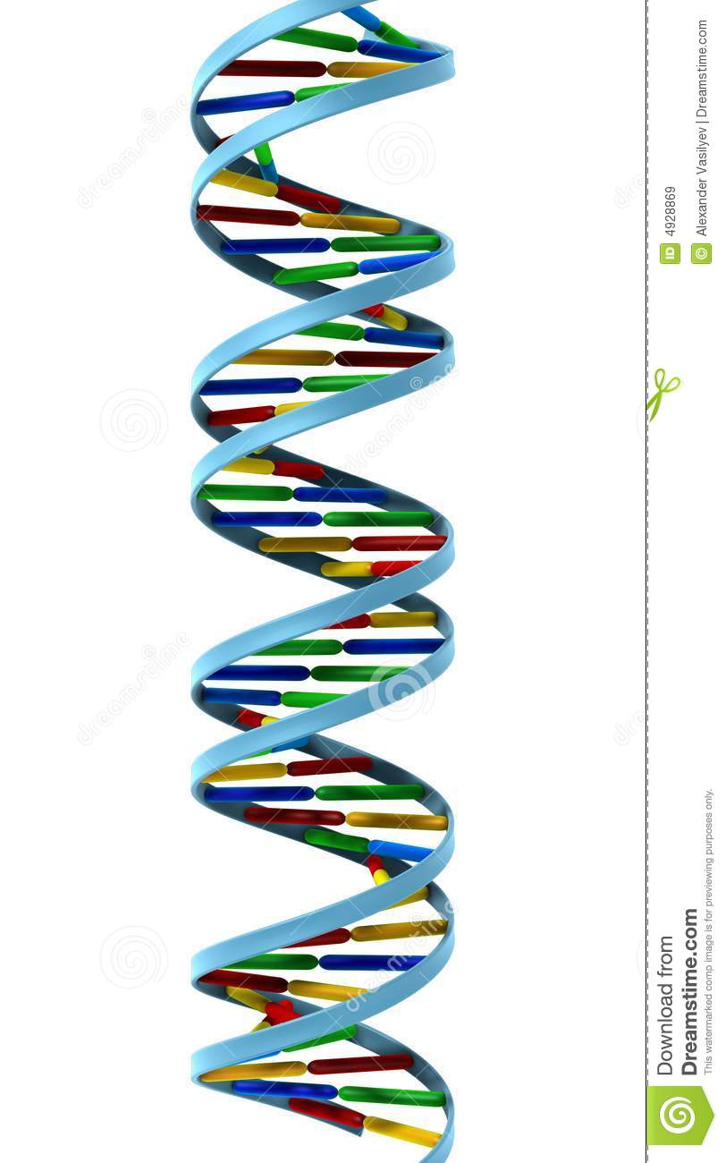 Dna (Deoxyribonucleic Acid; DNA, Double-Stranded)