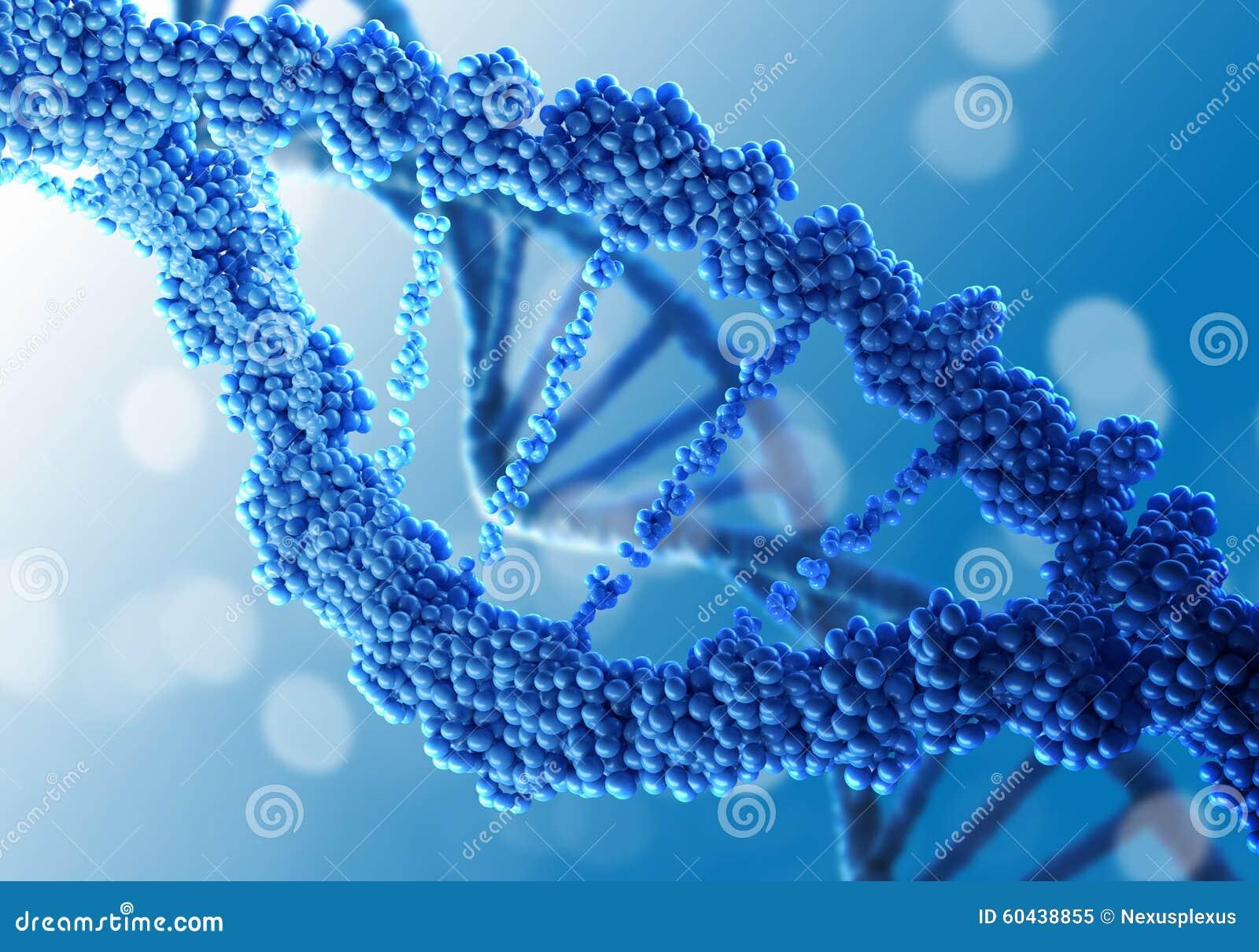 DNA molekuła