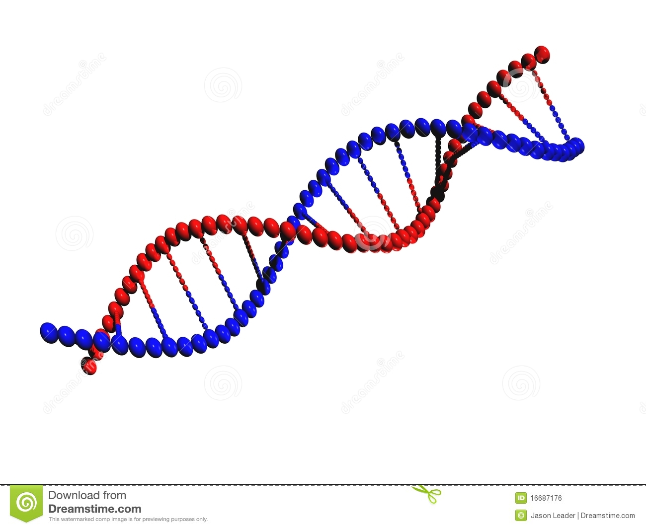 dna strand stock illustration. illustration of model - 16687176