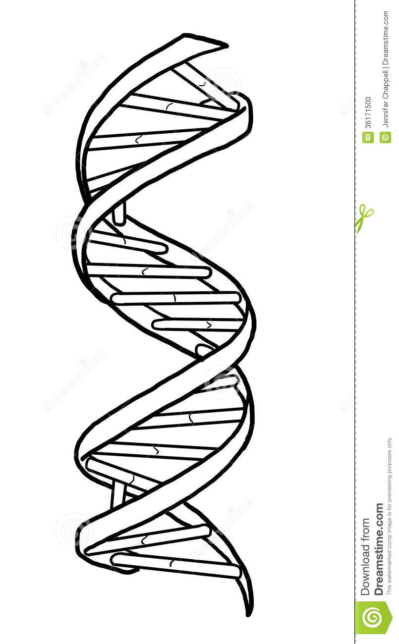 Stock Photo Dna Strand Model Helix Image36171500 on ladder diagram