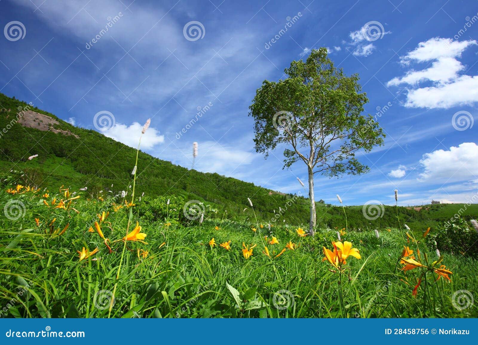 Dnia drzewo i leluja