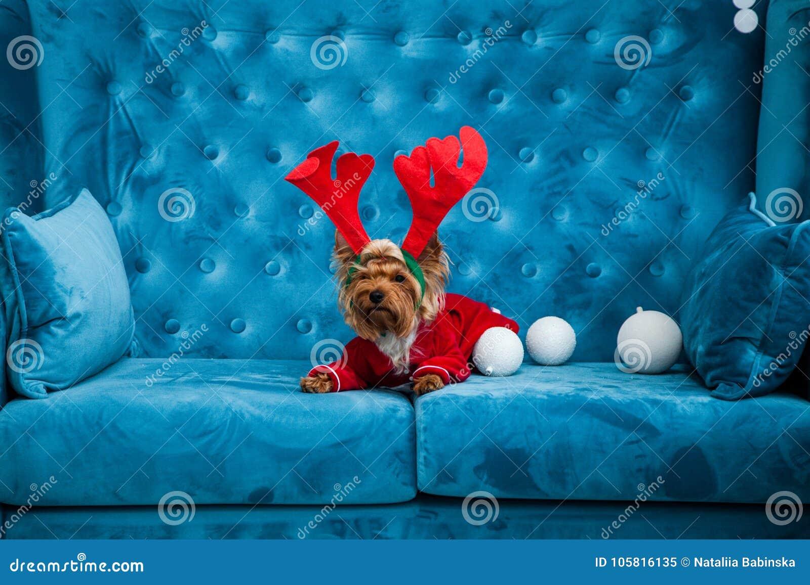 Do Natal azul tiffany do ano novo do animal de estimação do cão da cor de turquesa do sofá da sessão de foto brinquedo vermelho d