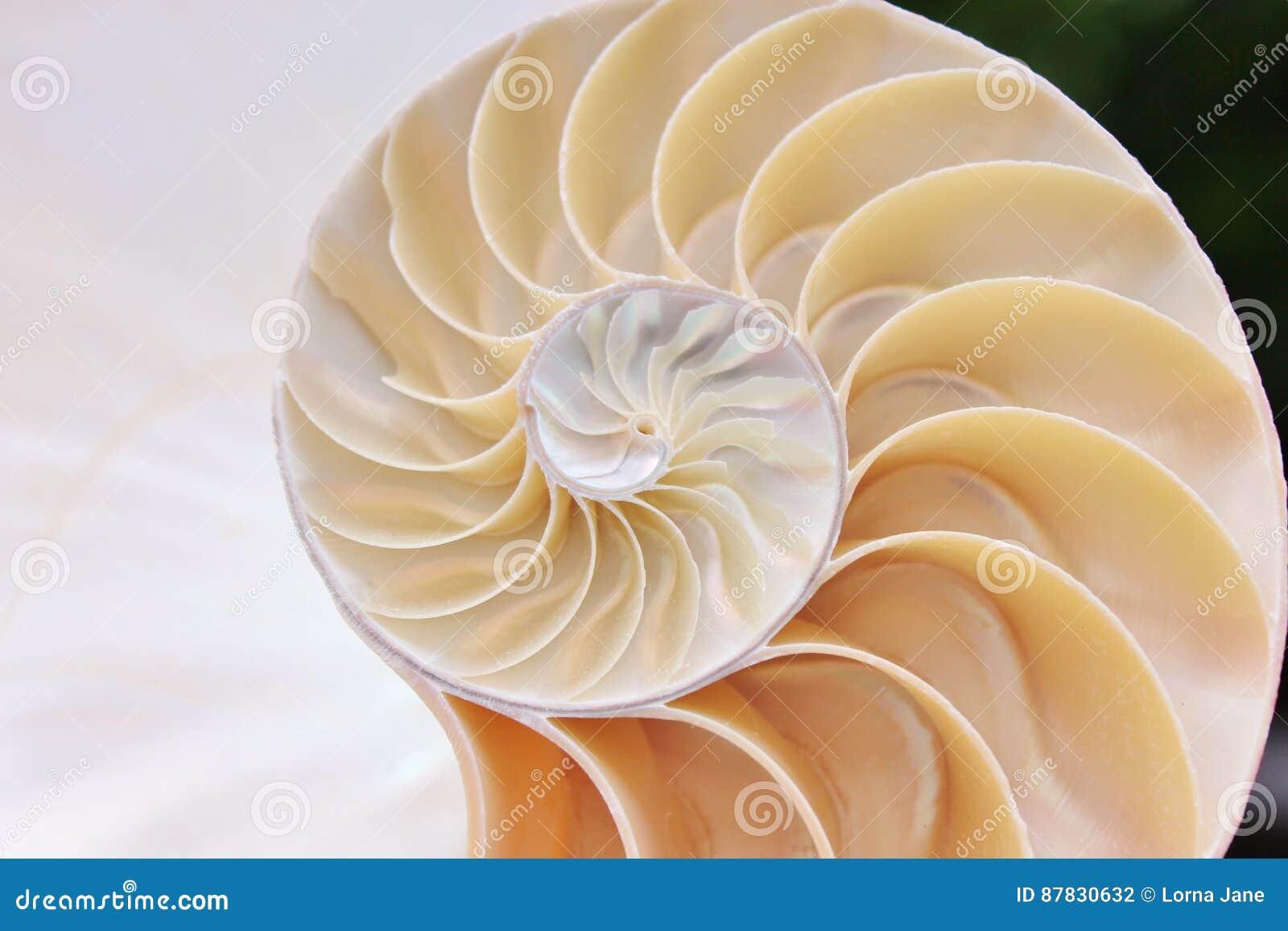 Do nautilus do shell da simetria de Fibonacci da relação da estrutura do crescimento do fim fim iluminado da madrepérola acima pa
