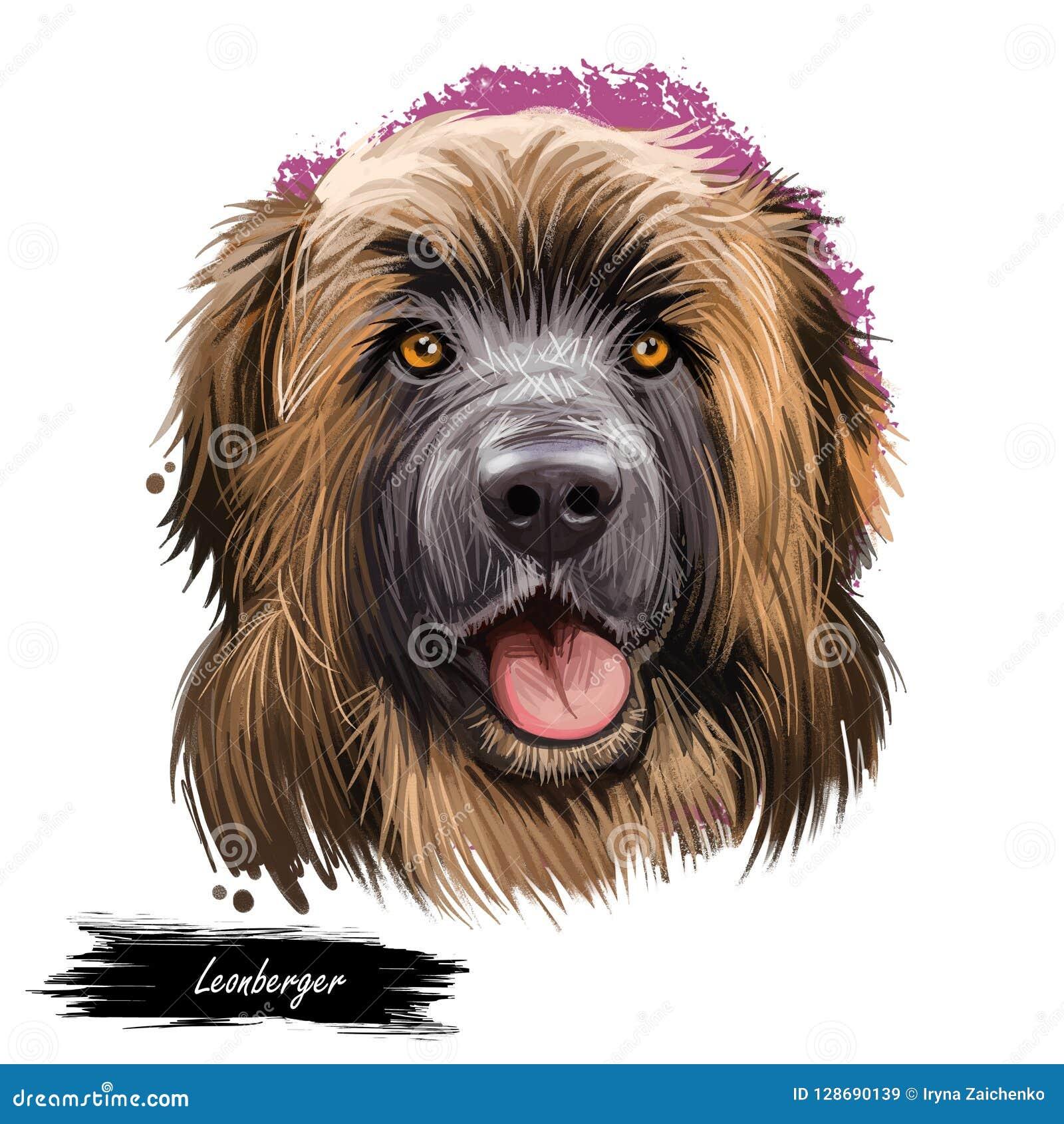 Do retrato gigante do close up da raça do cão da montanha de Leonberger ilustração digital da arte Puro-sangue delicado de leo do