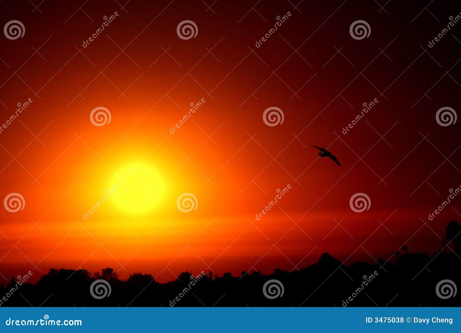 Do widzenia, słońce
