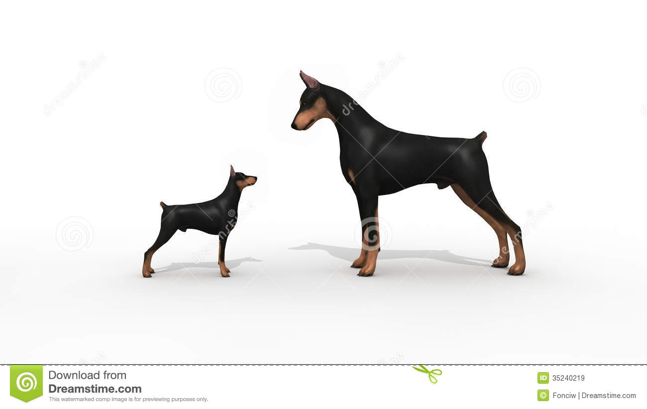 Doberman Protection Royalty Free Stock Images Image