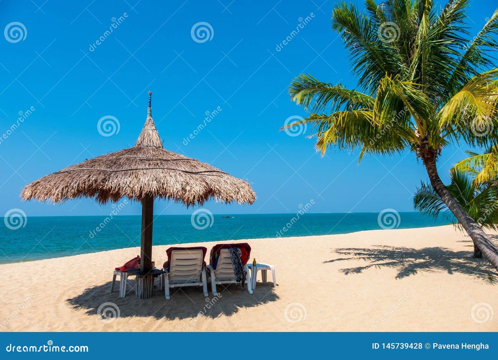 Dobiera się plażowych krzesła i kokosowego drzewka palmowego na tropikalnej plaży z tłem morza i niebieskiego nieba
