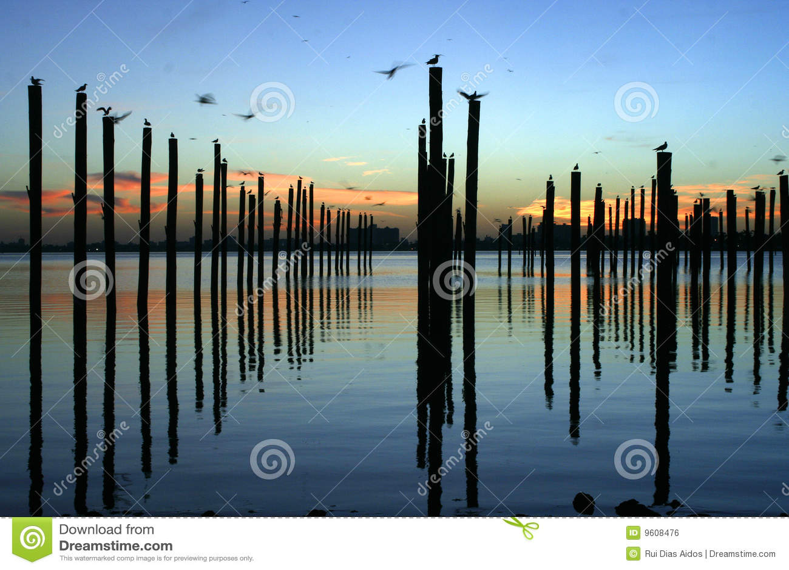 Docking poles at sunrise