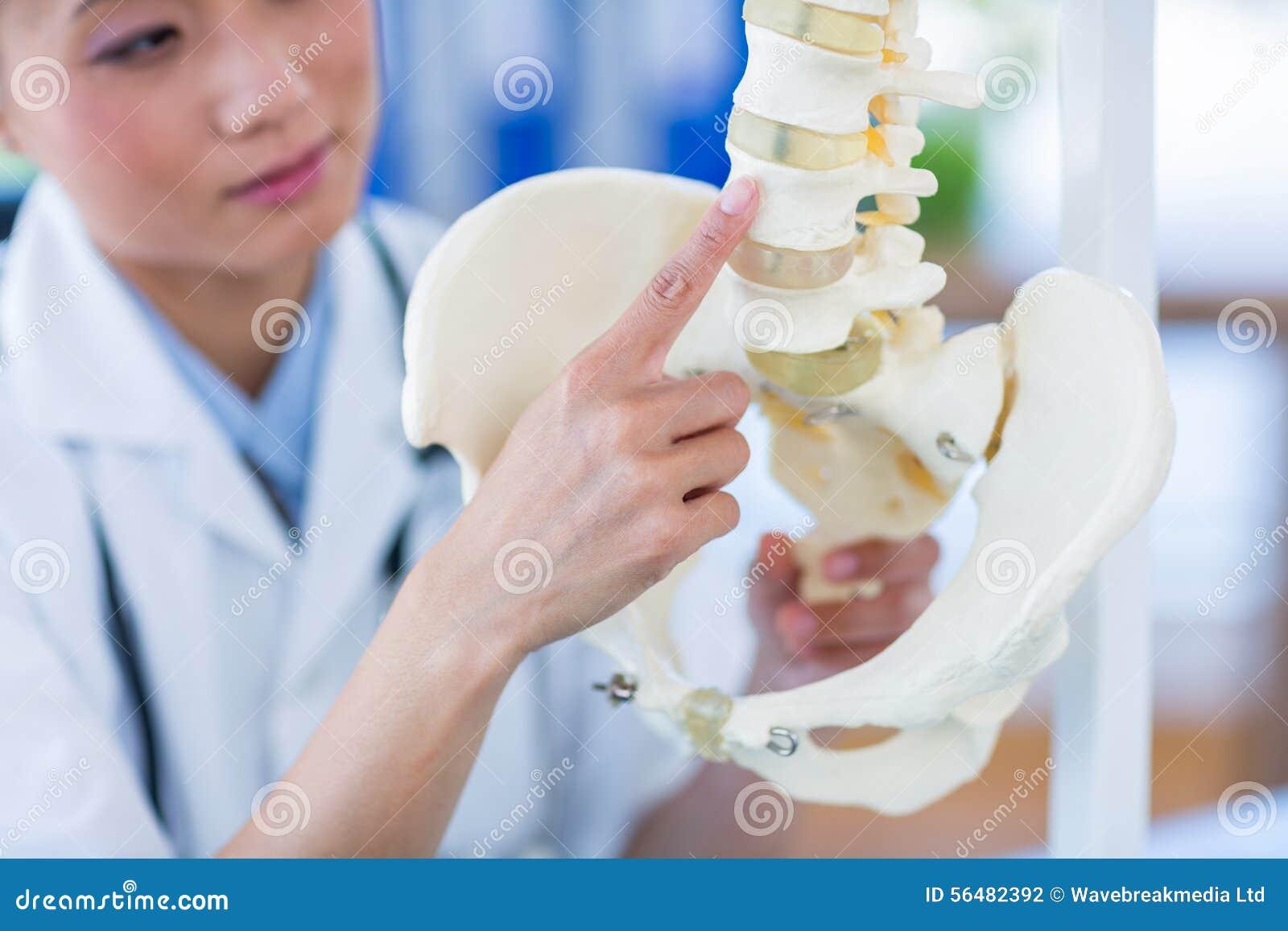 Docteur montrant l épine anatomique