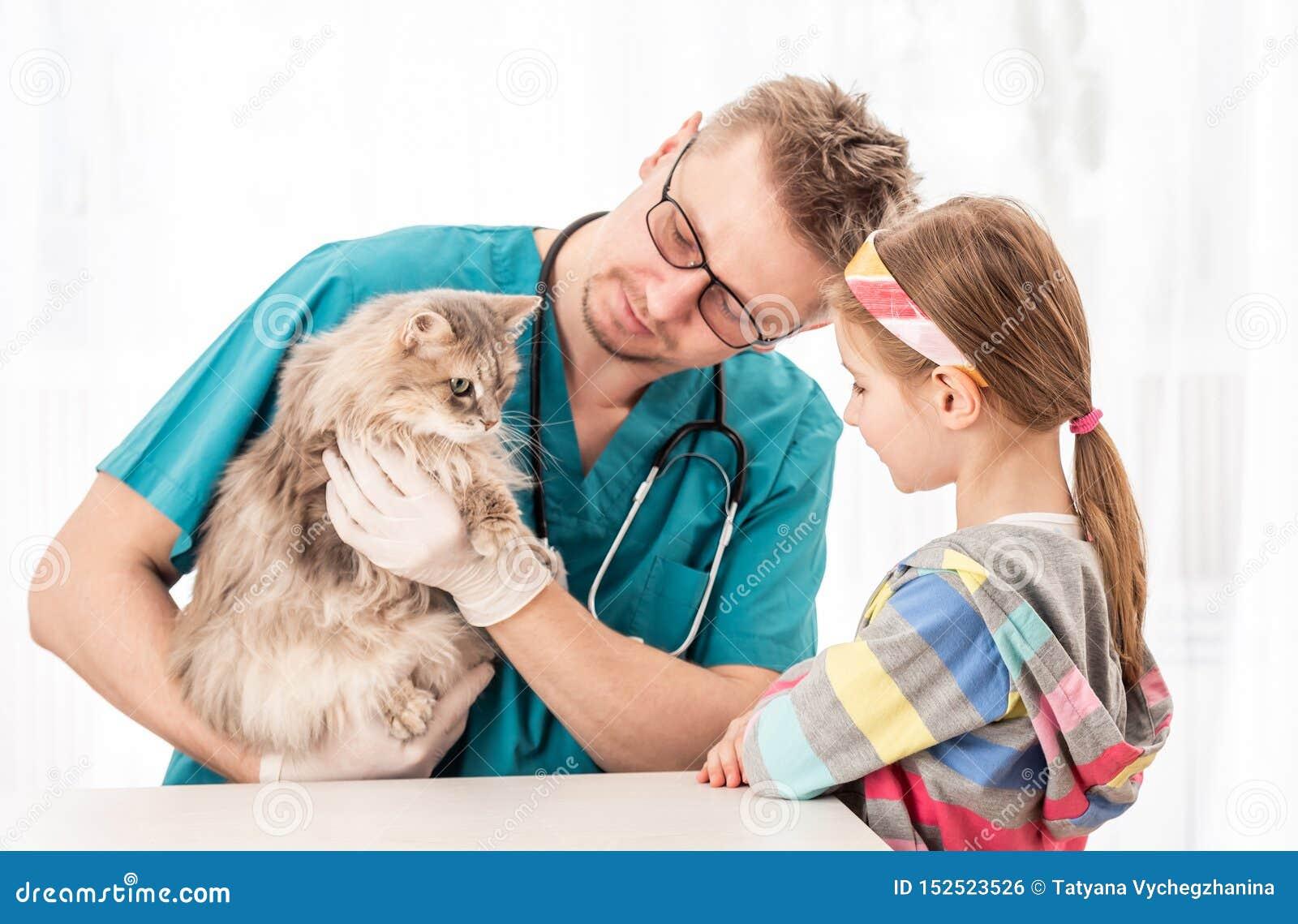 Doctor del veterinario que comprueba el gato para saber si hay enfermedades