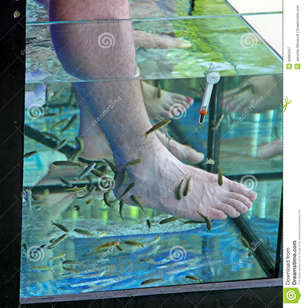 Doctor fish fisha spa royalty free stock photography for The fish doctor