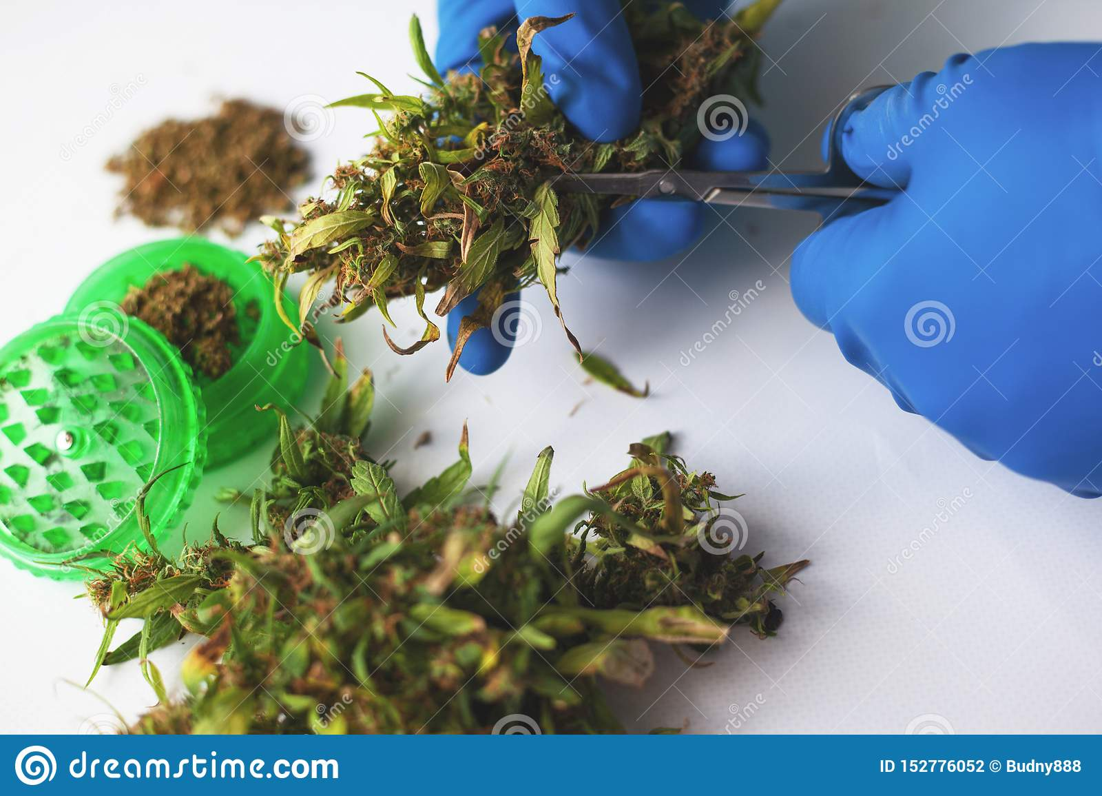 The doctor tells the patient how to properly cut cannabis leaves to consume the most valuable product of marijuana