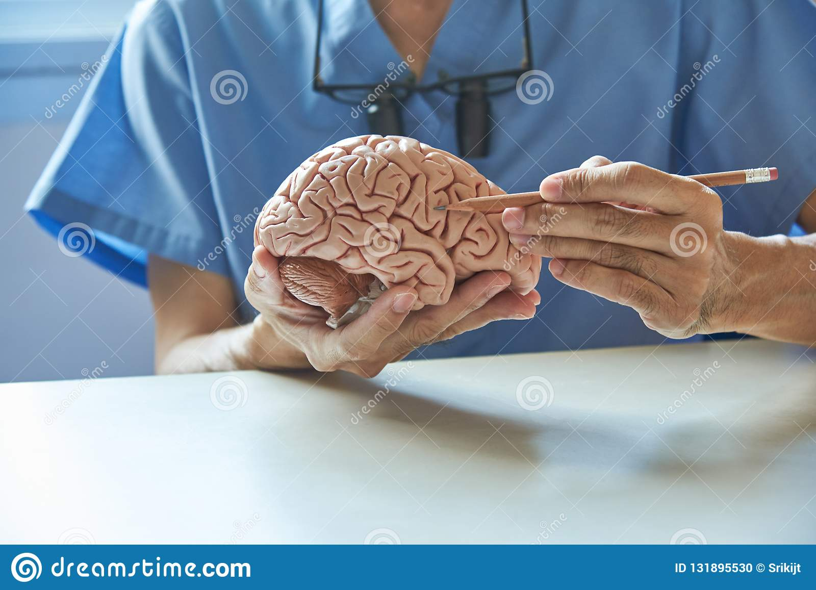 Doctor Using Pencil To Demonstrate Anatomy Of Artificial Human B