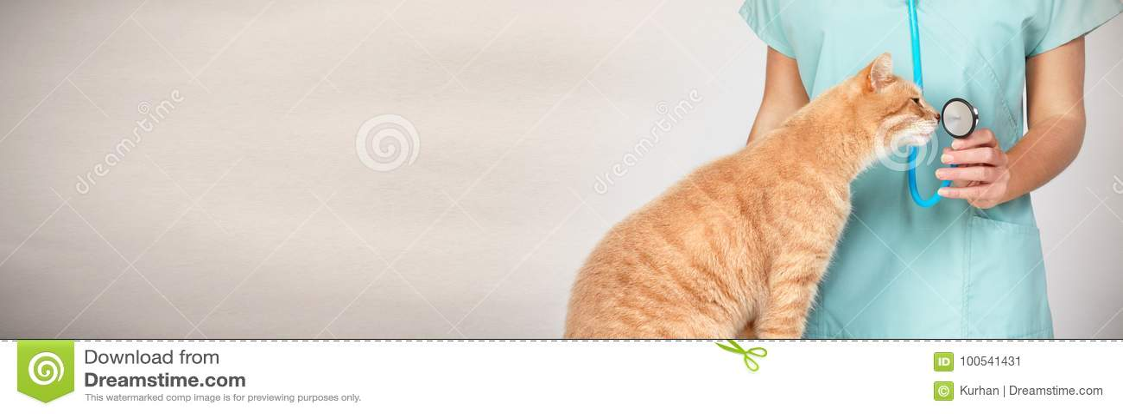 Doctor veterinario con el gato en clínica veterinaria