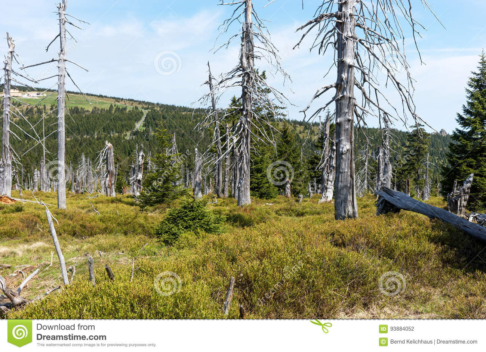 Dode bomen - Effect van milieuvervuiling