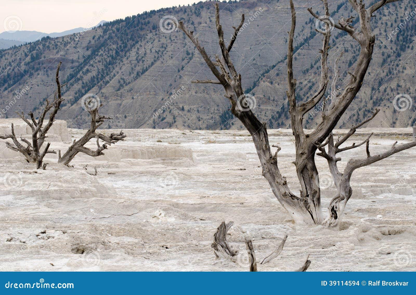 Dode Bomen in Yellowstone